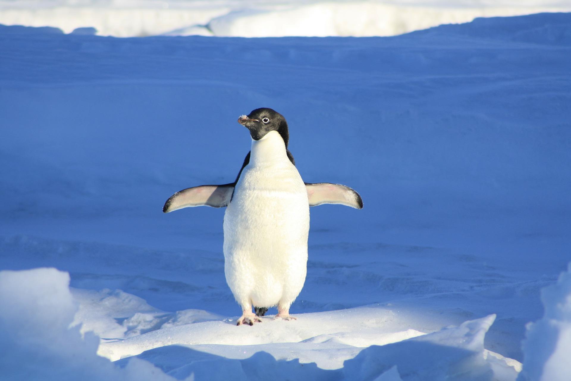 Mornari koji pevaju pingvinima