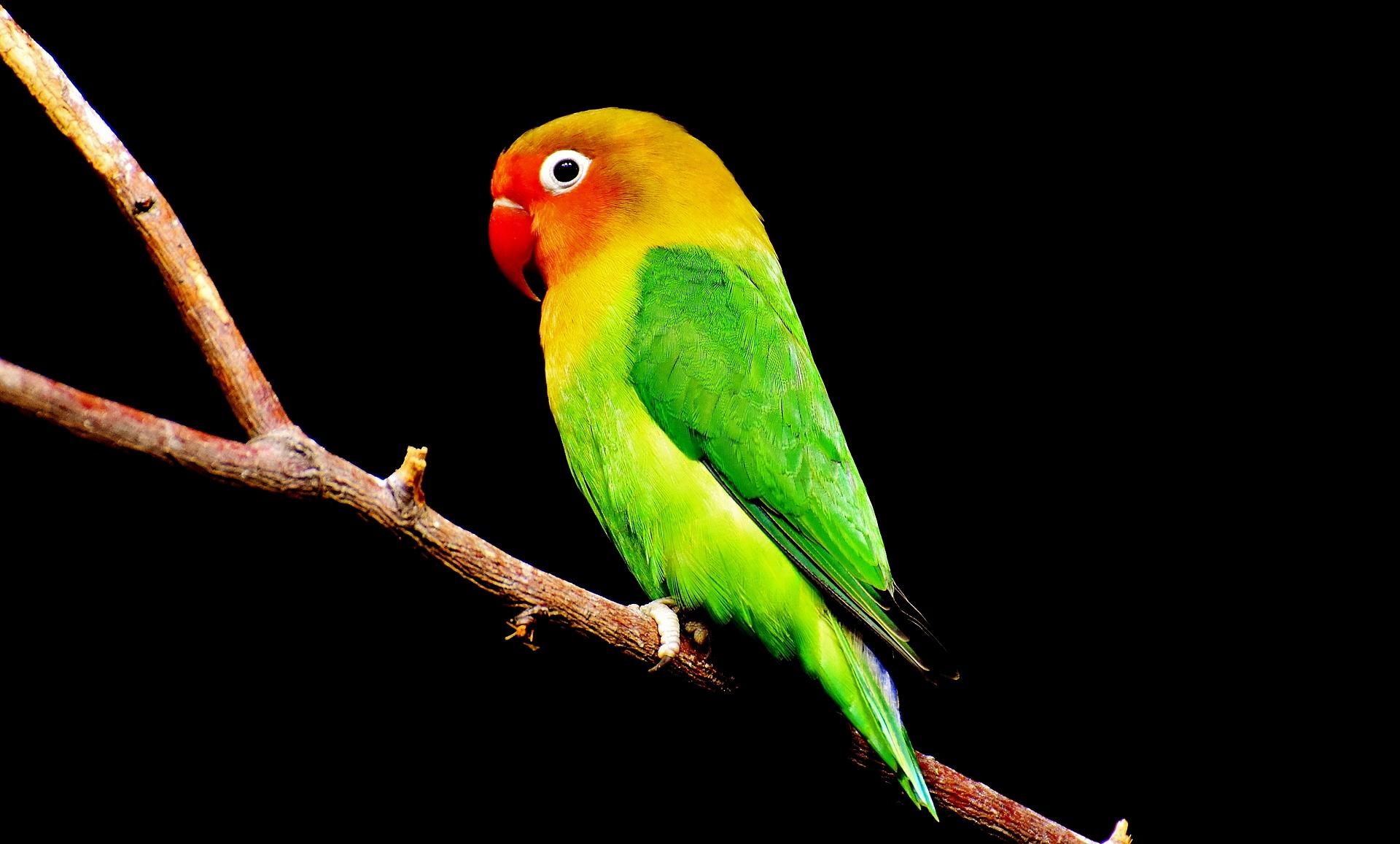 Obi - hrabra ptičica