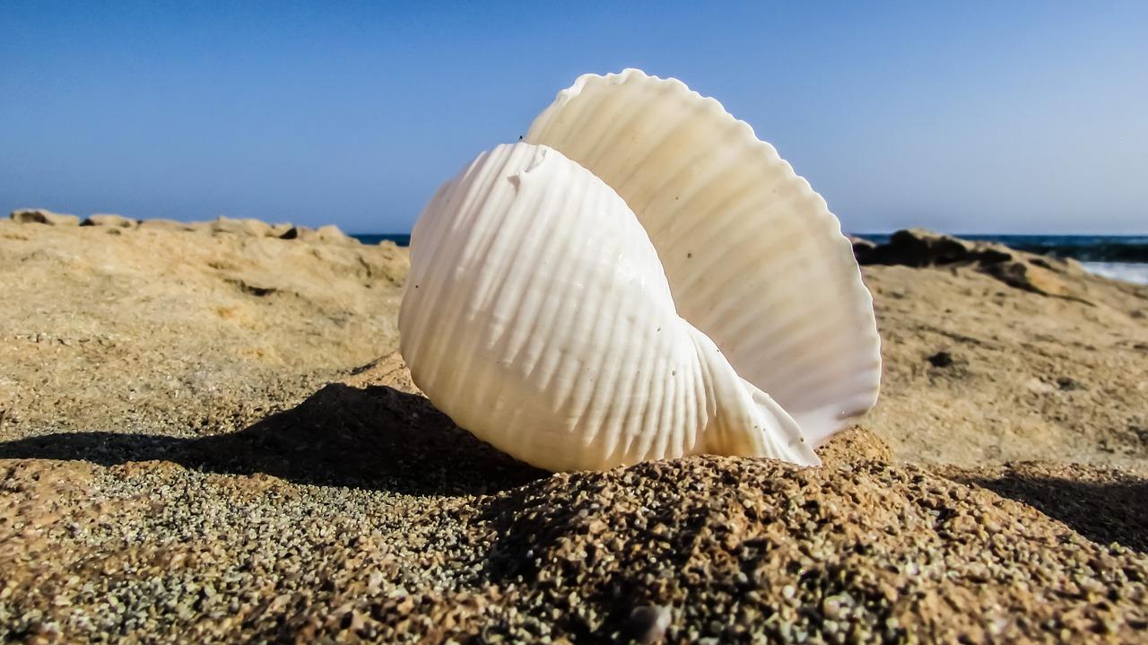 Romantični šum iz dubine  morske školjke