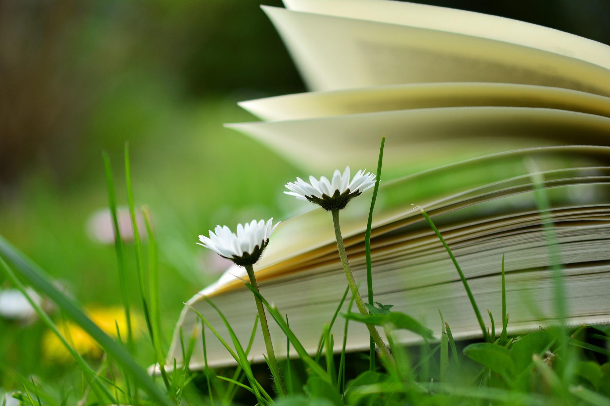 Zašto je dobro učiti u prirodi?