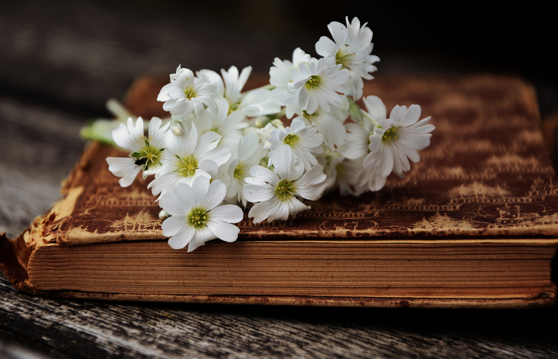 Persi Biš Šeli: Romantičar kog su volele tri sestre