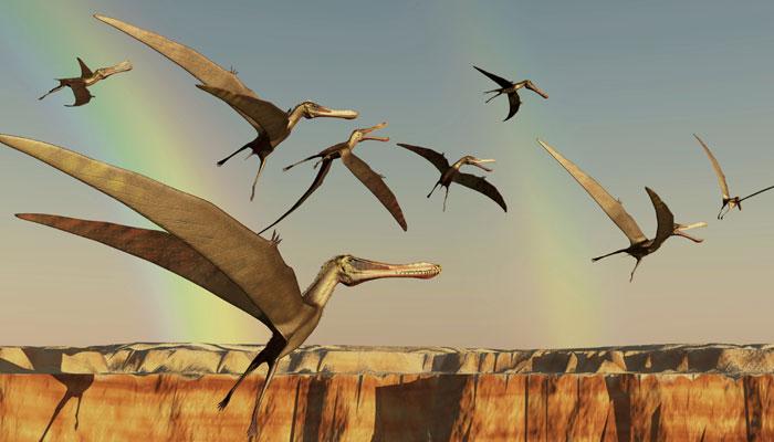Drevne ptice su gakale, a ne pevale!