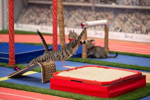 Verovali ili ne: Mačje Olimpijske igre